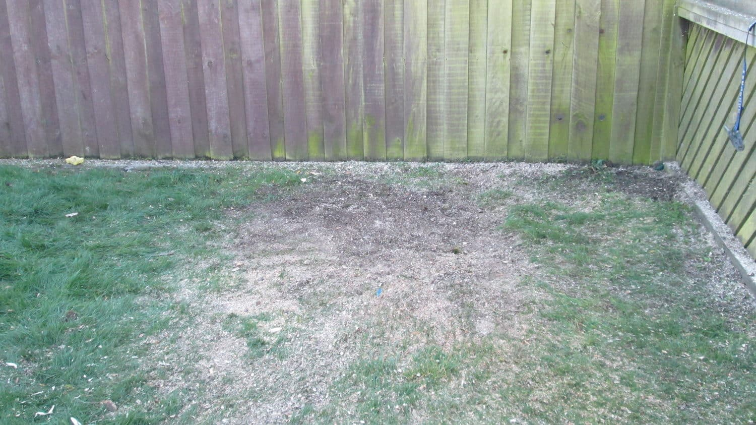 After tree stump removal